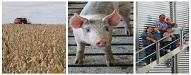 Top 20 Agriculture Blogs cornbeanspigskids.com